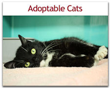 Adoptable Cats